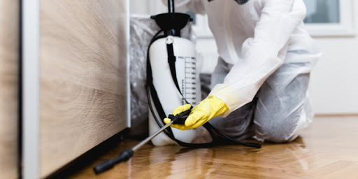 Signs of Home Damage Caused by Pests